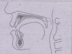 FIG, 27-7 Upward and backward movement of soft palate during normal speech, Its contact with posterior pharyngeal wall is shown.'