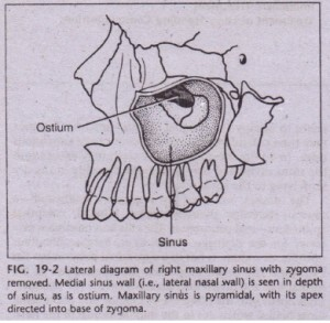 EMBRYOLOGY AND ANATOMY