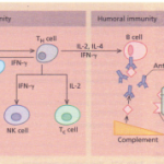 The normal immune response-the immune system in health