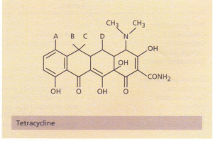 The structure of tetracycline. Substitution of CH3• OH or H at positions A to D produces variants of tetracycline.