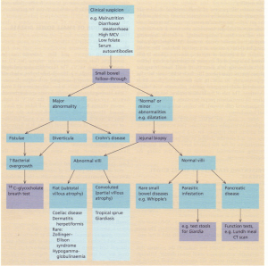 Flow diagram for investigation of patients with suspected small bowel disease. MCV; mean corpuscular volume.