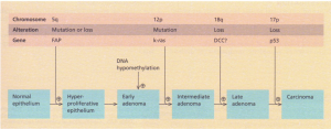 A genetic model for colorectal tumorigenesis. FAP, familial adenomatous polyposis (or adenomatous polyposis coli-APe); DCC, deleted in colon cancer. (From E. R. Fearon and B. Vogelstein (1990) eel/61, 759. With permission.)