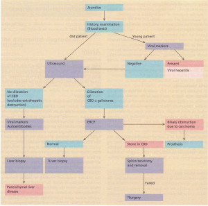 An algorithm for the investigation of jaundice. Viral causes are rarer in the elderly, CBD, common bile duct; ERCP, endoscopic retrograde cholangiopancreatography.