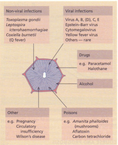 Some causes of acute parenchymal damage.