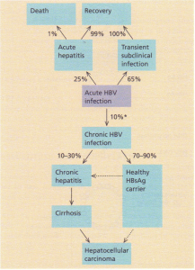 """Clinical course of hepatitis B infection. """", percentage variable worldwide."""