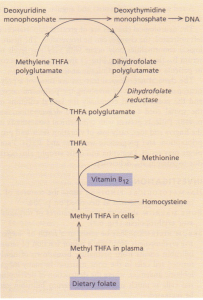 The structure of methyicobalamin. the main form of vitamin B'2 in the plasma.