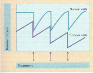 Effects of multiple courses of cytotoxic chemotherapy.