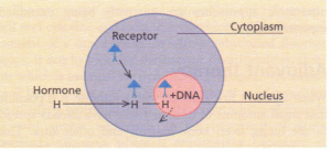Mechanism of the cell receptor system.