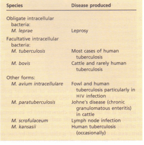 Classification of Mycobacterium species based on their capacity to produce disease.