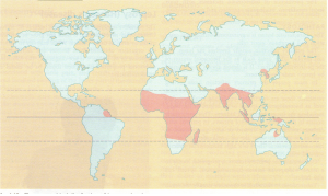 The geographical distribution of leprosy, showing areas where the prevalance is 5 in 1000 or greater.