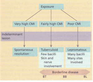 Clinical spectrum of leprosy.