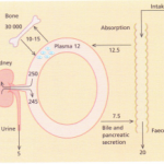 Physiology, structure and formation of bone