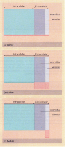 The relative effects of addition of 1 litre of water