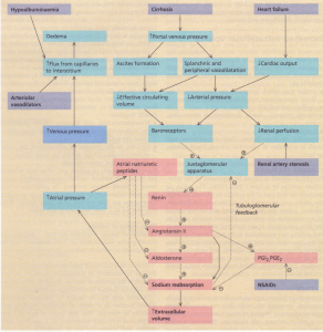 Regulation of extracellular volume in health and disease.