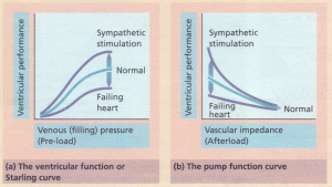 The Frank-Starling mechanism, showing the effect on ventricular