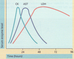 The enzyme profile in acute myocardial infarction. AST,