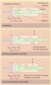Diagrams showing the ventilatory forces during
