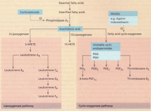 Arachidonic acid metabolism and the effect of drugs.