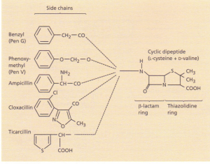 The structure of penicillins.