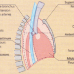 Disorders of the diaphragm