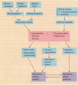The sympatho-adrenal response to shock.