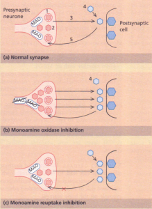 Mechanism by which monoamine