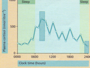 Plasma cortisol levels during a 24-hour period.