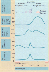 Hormonal and follicular changes during the normal menstrual cycle.