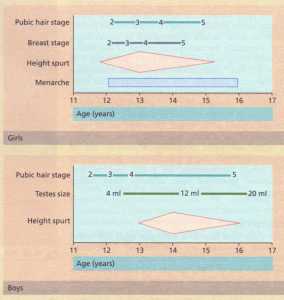 The age of development of features of puberty.