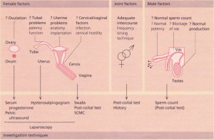 The major factors involved in subfertility and their investigation.