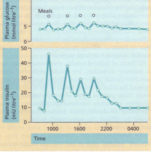Glucose and insulin profiles in normal subjects.