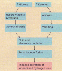 Dehydration occurs during ketoacidosis as a consequence of two parallel processes.